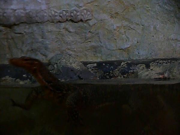 Обитатели крокодиляриума