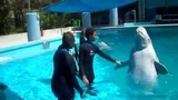 Dylan's Beluga Whale Interaction (1 of 2)