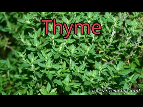 Thyme and Thyme Tea Benefits for Health, Hair and Skin - One of Natures Top Antioxidant Herbs