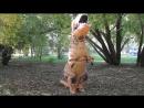 По следам динозавра