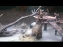 Панда парк в Чэнду