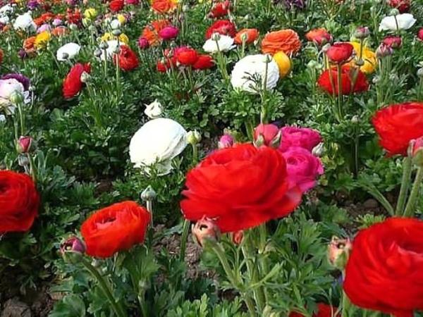 Цветочный рай 2 музыка для души