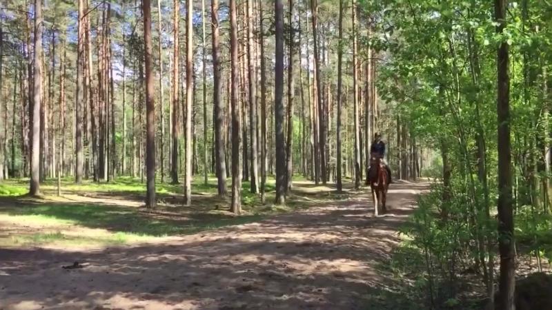 Рысь в лесу
