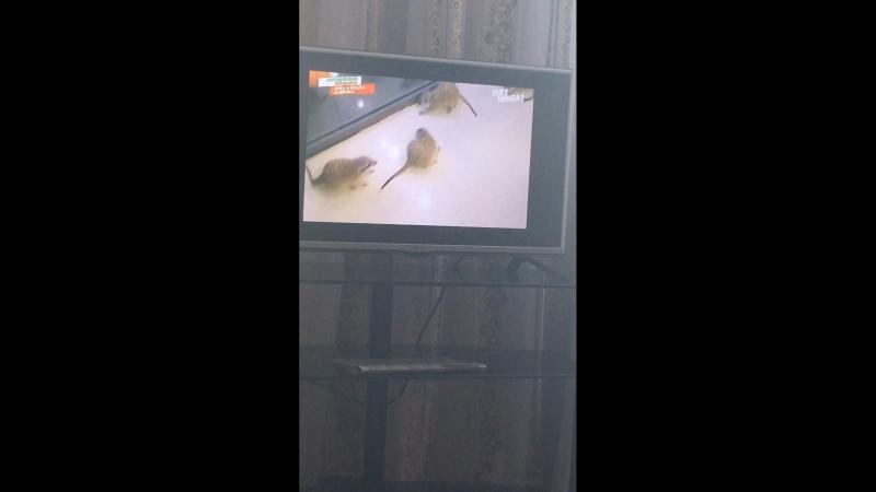 Орёл и решка Сеул животные