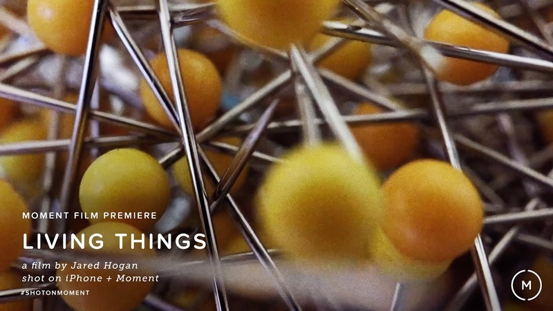 """Shot on iPhone 6S and Moment Lenses """"LIVING THINGS"""" 