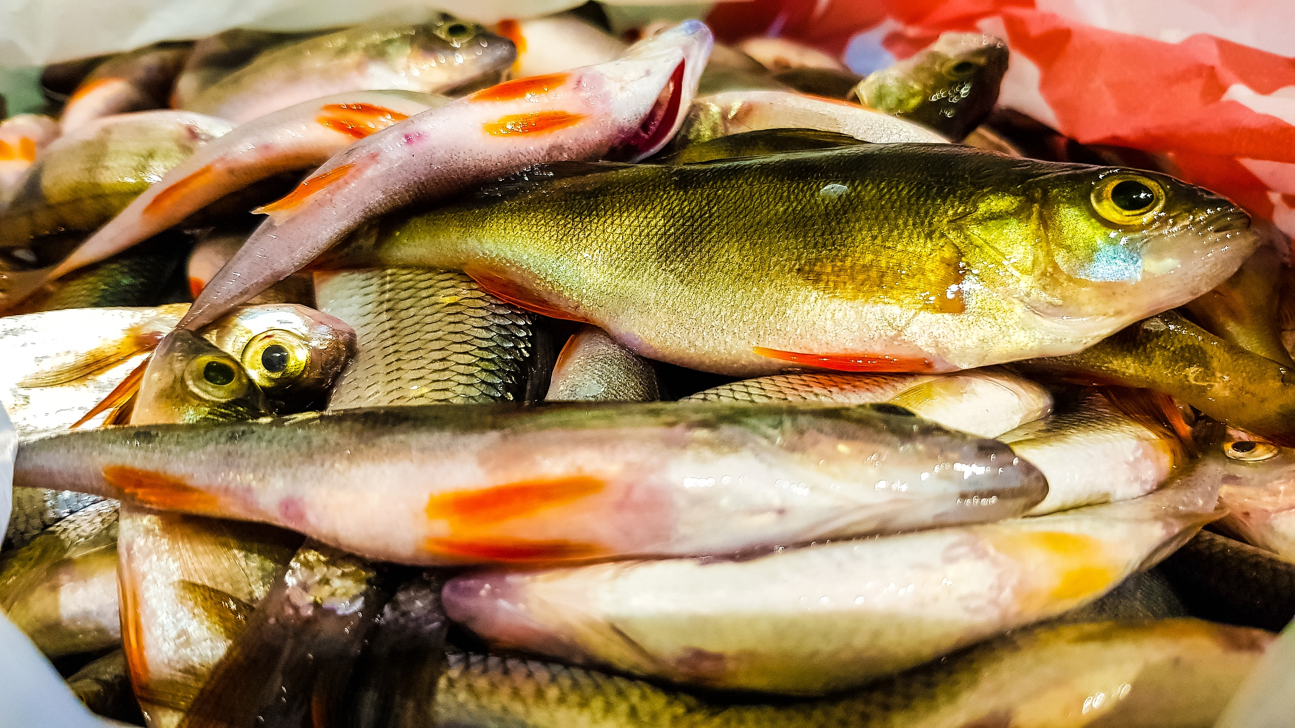 Рыбалка без границ | Хобби