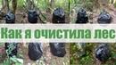 Как я очистила лес
