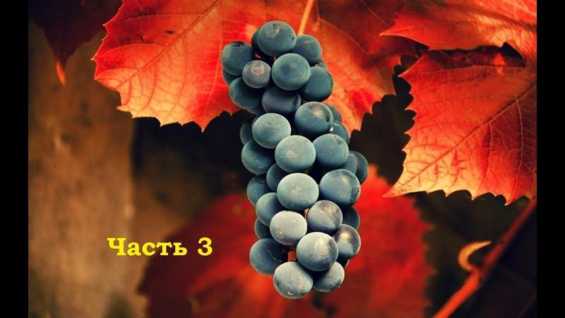 Пошаговая инструкция. Укоренение черенков - метод Квебек. Виноград центр /grape center