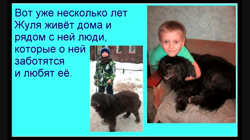 Зимин Дима МАДОУ № 1 Калинка 6 лет Моя собака Жуля