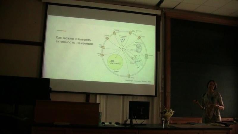 Bioseminars.ru Как увидеть активность нейронов в микроскоп