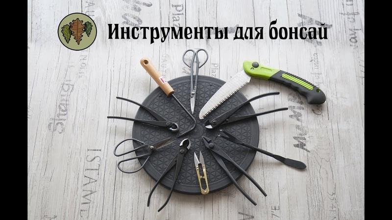 Инструменты для бонсай Для чего они нужны