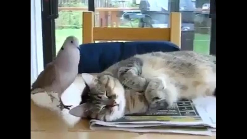 Ustaj mačko da idemo u kafanu