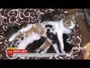 Мер Кам'янця-Подільського створив на власному подвір'ї притулок для тварин