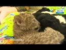 Собака из Приморья усыновила детеныша леопарда