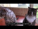 Коты устроили бардак