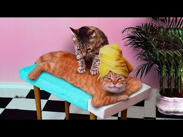 Gatti pazzi ✪ Gatti divertenti ✪ Gatto che fa i massaggi 29