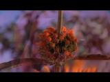 Павел Кашин - Расцветёт Земля - YouTube