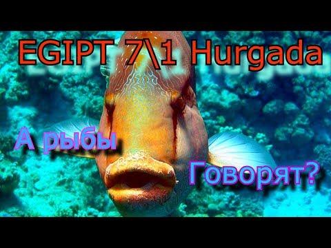 Египет Хургада 7.1 А рыбы говорят?