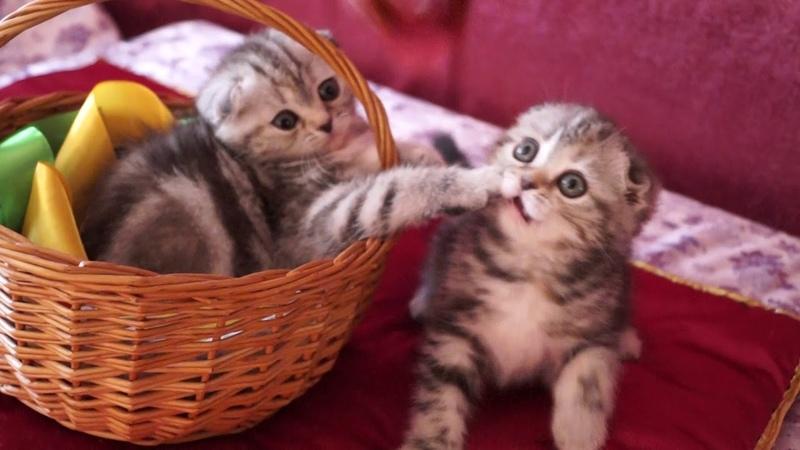 Джина и Рани с корзинкой...