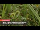 Новости UTV В Башкирии за сутки возникло два очага природных пожаров