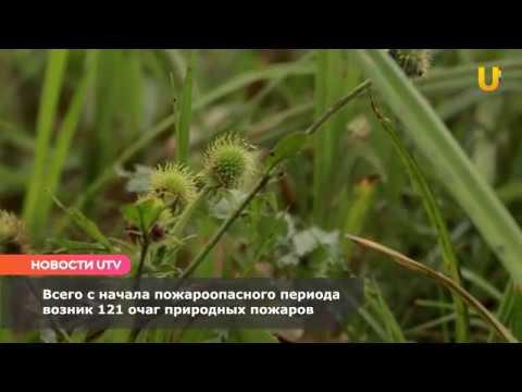 Новости UTV. В Башкирии за сутки возникло два очага природных пожаров