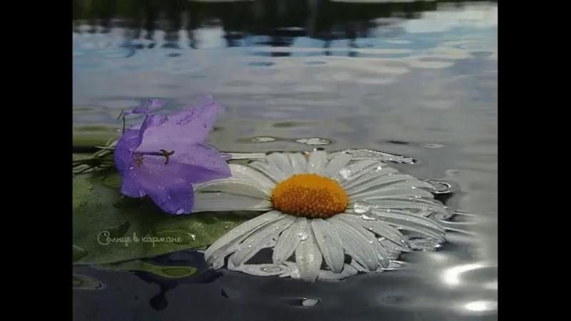 Есть три незаменимых лекарства на земле природа любовь и чувство юмора Природа помогает жить любовь помогает выжить а ч