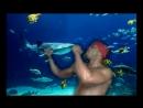 аквалангисты хотели поснимать рыб но наткнулись на подводного рикардо милоса