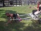 Pony_human cart rides