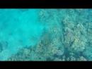 Подводный мир Красного моря! 😍