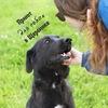 Муниципальный приют для собак в Щербинке