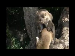 Monkey sex.mp4