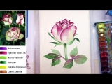 2 Роза. Цветок, как нарисовать АКВАРЕЛЬ Мастер-класс Anurisui