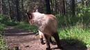 Симба. Тайский кот. Прогулка в лесу. Дневник кота 3