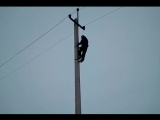 Практический урок для электрика. Видео приколы