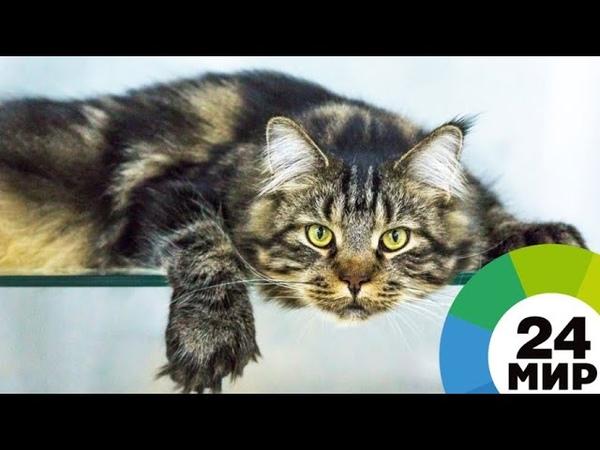 Сосед по коммуналке выкинул свыше 12 кошек из окна многоэтажки - МИР 24