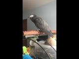 Попугай повторяет звук, после Ok google 😃
