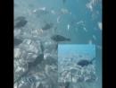 Уникальный подводный мир Красного моря. 4 июня 2018