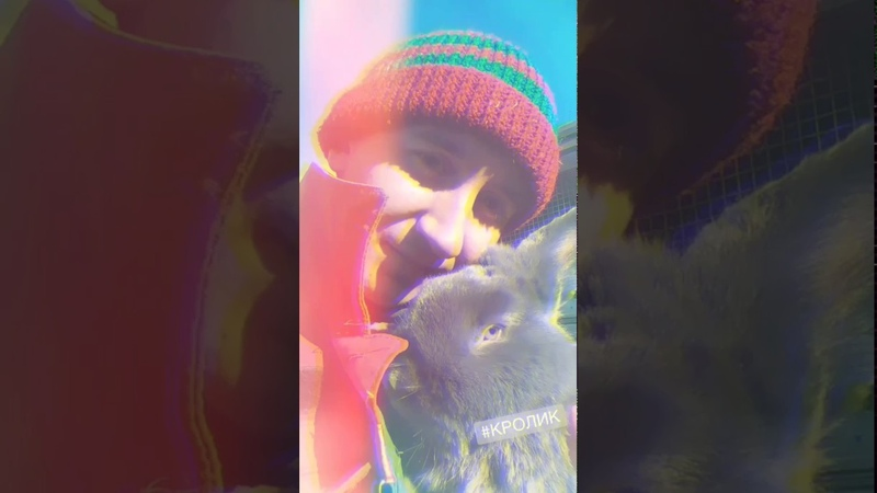 Мобильный кролик, новый способ быстро делиться информацией | Новый проект Арболитич