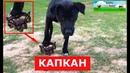 Собака попала в КАПКАН Её спасли затем она воспитала котят Спасение животных