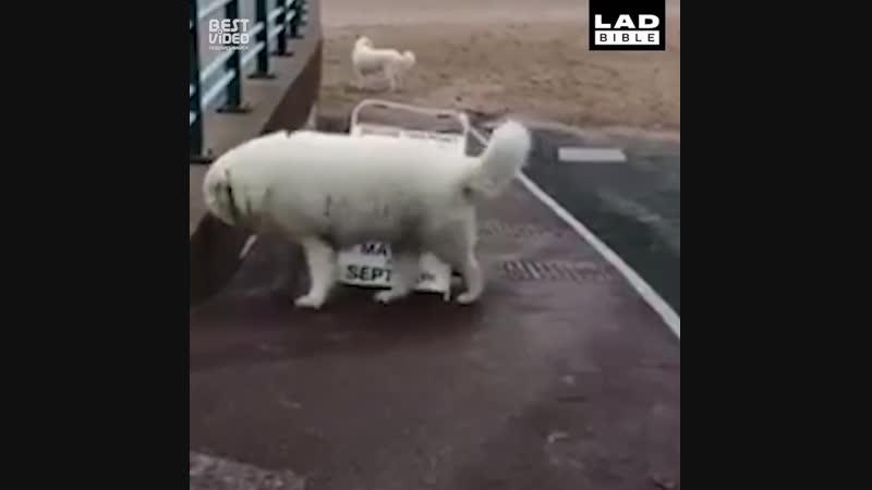 Без собаки жизнь скучна
