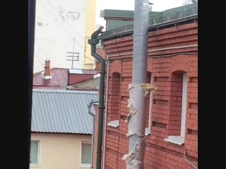 Соболь в Томске