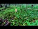 [ЛЕСНЫЕ] 24 ЧАСА В ЛЕСУ - РЫЖИЙ ЗВЕРЬ И КЕДРОВЫЙ ОРЕХ | Секреты и Навыки | Лесные хитрости | Bushcraft Skills