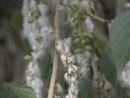 Испытание для аллергиков как пережить сезон тополиного пуха