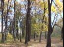 Мой лес моё додзю 2 Тайцзи ведёт к гармонии Как у природы не учиться Когда видишь падающий лист его траекторию полёта