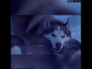 ♡Человек собаке друг ♡ :)