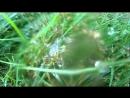 Сбор Росы c Тумана для Чая Luxe Целительно-Оздоровительного ОзоноТерапия АромаВкусовойМедиатор RelaxMegaKult