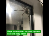 Гигантский паук напугал человека и кота