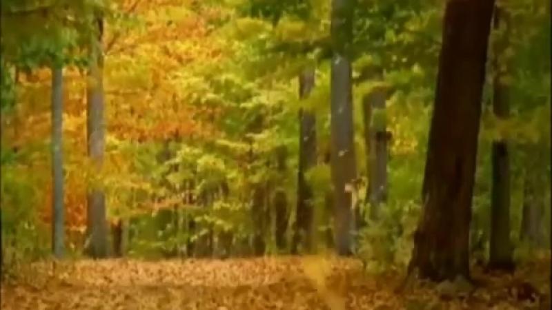 Вивальди Осень смотреть онлайн без регистрации