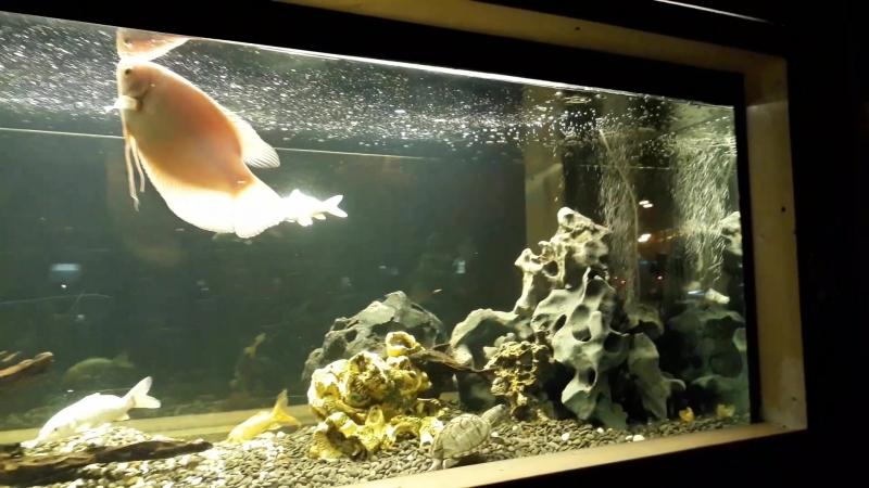 Аквариуи во дворе дома Шоссе Энтузиастов 10 2 аквариум рыбки аквариумвмоскве москва чудомосква