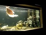 Аквариуи во дворе дома Шоссе Энтузиастов 102 #аквариум #рыбки #аквариумвмоскве #москва #чудомосква